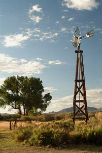Wooden windmill tower with green cottonwood tree